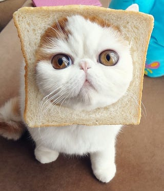 "Illustration for article titled It Would Be Distasteful to Call this Kitty, ""Inbread"""