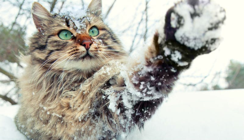 Illustration for article titled Cats Can Predict the Weather, Says Really Old Book