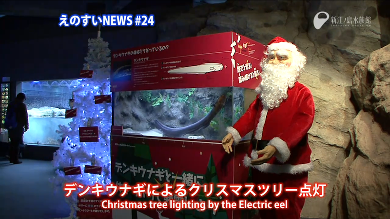 Illustration for article titled Electric Eel-Powered Christmas Trees Are Shockingly Better Than Yours