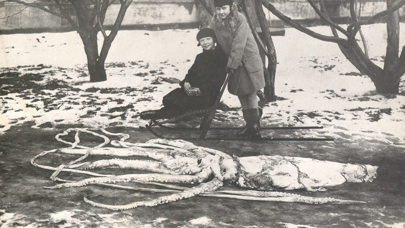 Illustration for article titled COTD: Giant Squid Edition