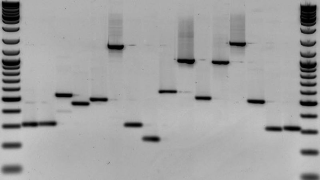 Dutch Police Are DNA Testing 21,500 Mento Solve a 20-Year-Old Murder