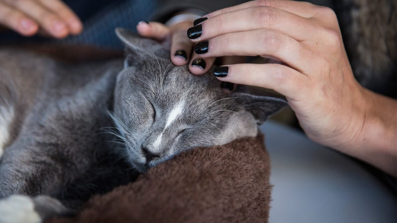 Scientists Prove That Your Cat Probably Likes You A Lot