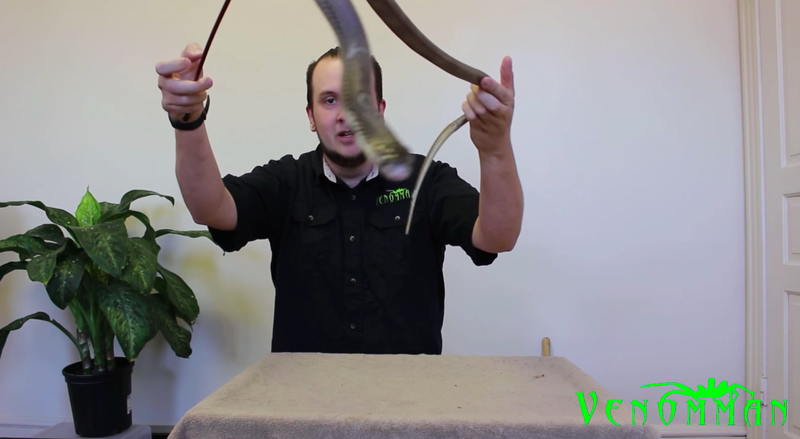 Illustration for article titled YouTuber 'VenomMan20' Charged After Taking Venomous Snakes Home From Zoo