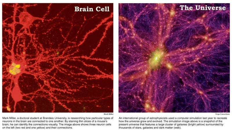 Illustration for article titled Which is bigger: the Universe or the human brain?