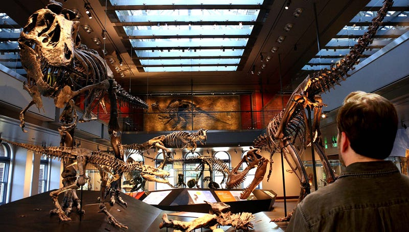 Illustration for article titled Man Discovers Huge Cache Of Rare Fossils While Walking Through Natural History Museum