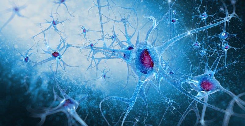 Logran crear neuronas electrónicas que se comunican con las naturales