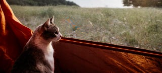 Illustration for article titled How To Take Your Cat Camping