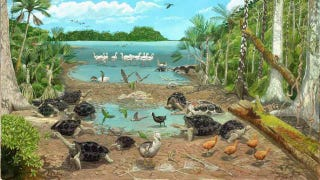 Illustration for article titled Dodos were always too dumb to live, even 4000 years ago