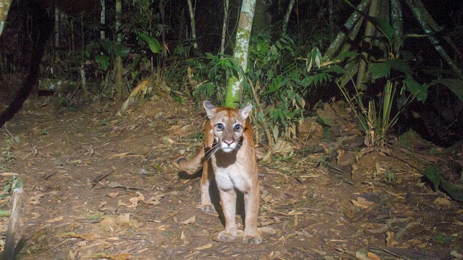 "How Scientists Use Hidden ""Camera Traps"" to Get Incredible Cameos of Animals in the Wild"