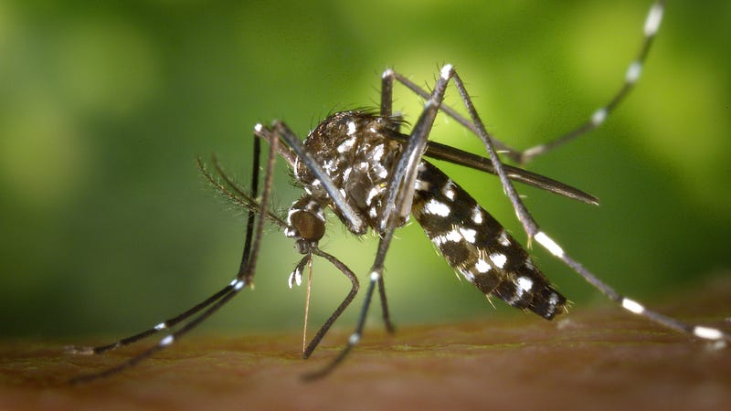 Illustration for article titled Dengue Outbreak Prompts State of Emergency on Hawaii's Big Island