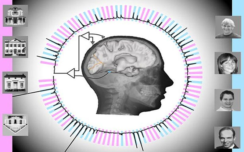Logran que un PC reconozca imágenes al mismo tiempo que un cerebro conectado a él