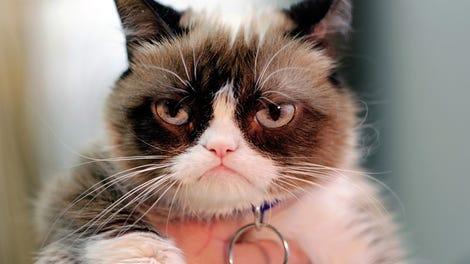 Grumpy Cat Dies at 7 Years Old