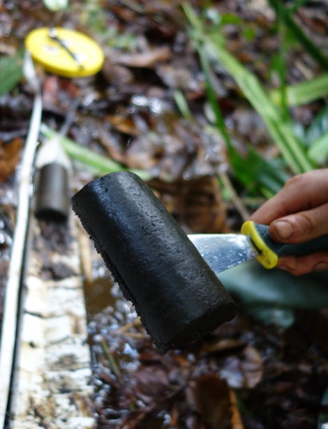 Peat in the Cuvette Central. Image: Simon Lewis