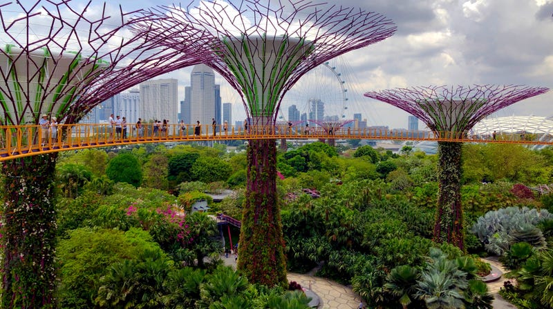 The Supertree Grove in the Gardens by the Bay