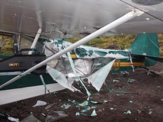 Illustration for article titled Bear Attacks Plane, Pilot Fixes Plane With Duct Tape, Pilot Flies Duct-Taped Plane Home