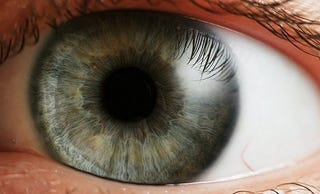 Illustration for article titled Dilate or Shrink Your Pupils on Command