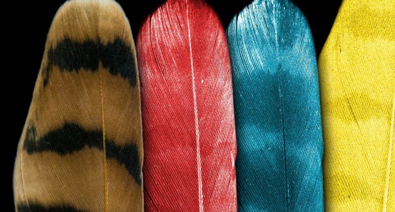 X-ray fluorescence maps of zinc, calcium, and benzo-sulfur in a kestrel feather. (Image: SLAC National Accelerator Laboratory)