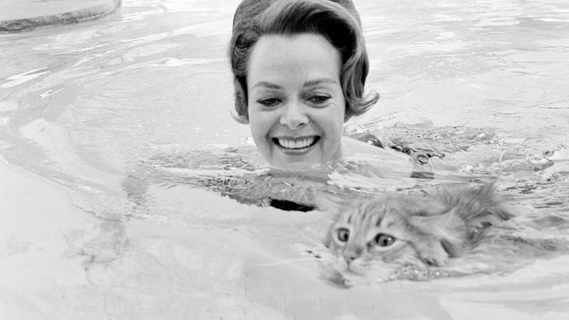 Illustration for article titled Here's a Lady Taking Her Cat for a Swim