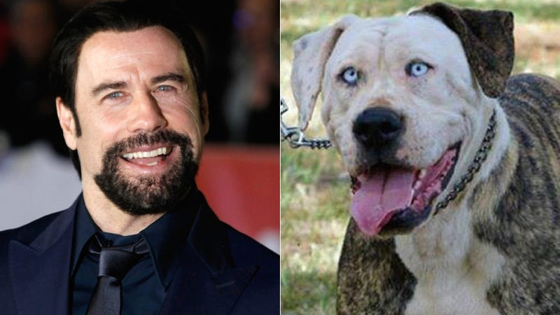 Illustration for article titled Hey, Quick Question: Why Does This Dog Look Exactly Like John Travolta