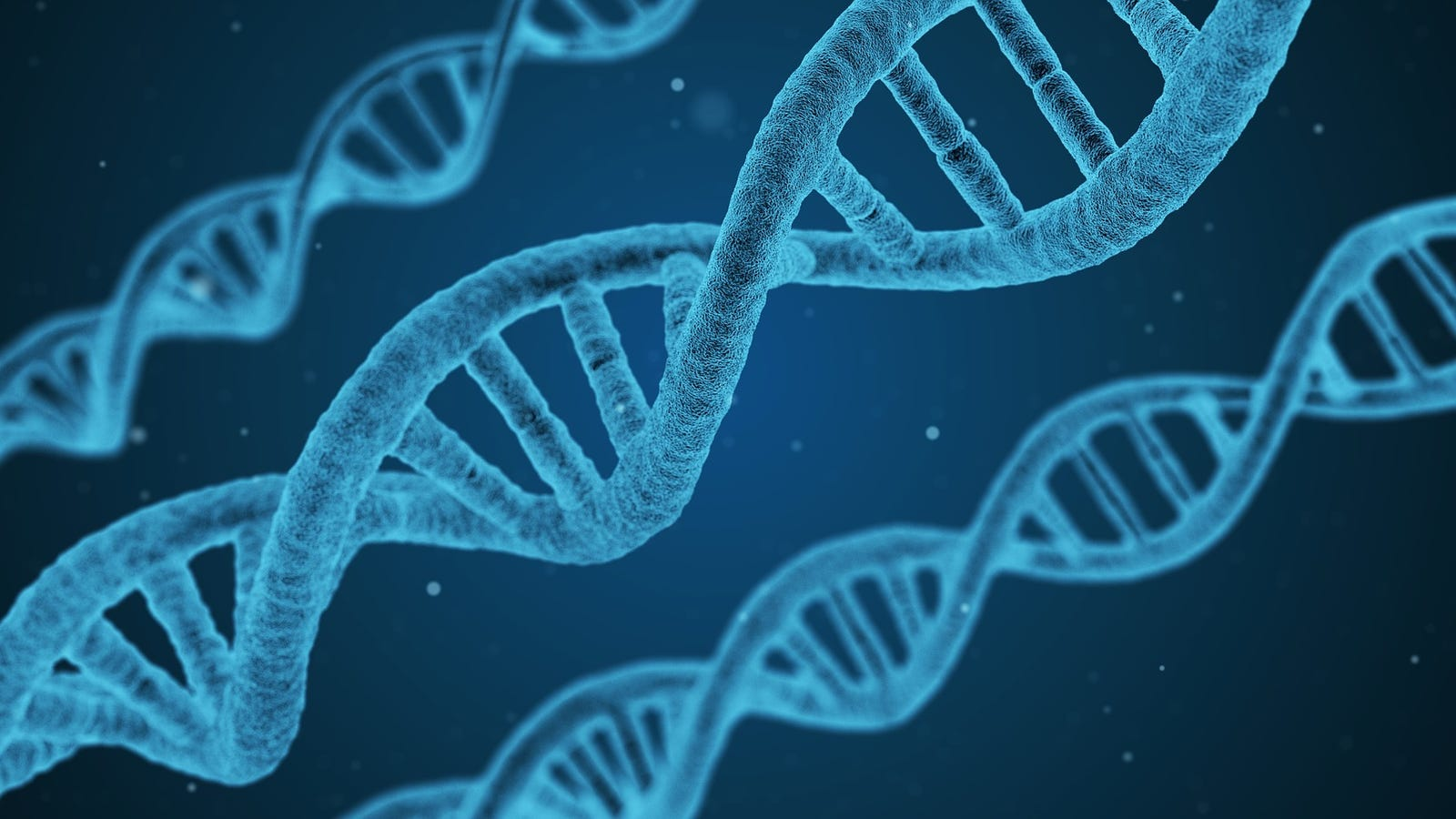Which DNA Databases Are the Best and Worst for Privacy?