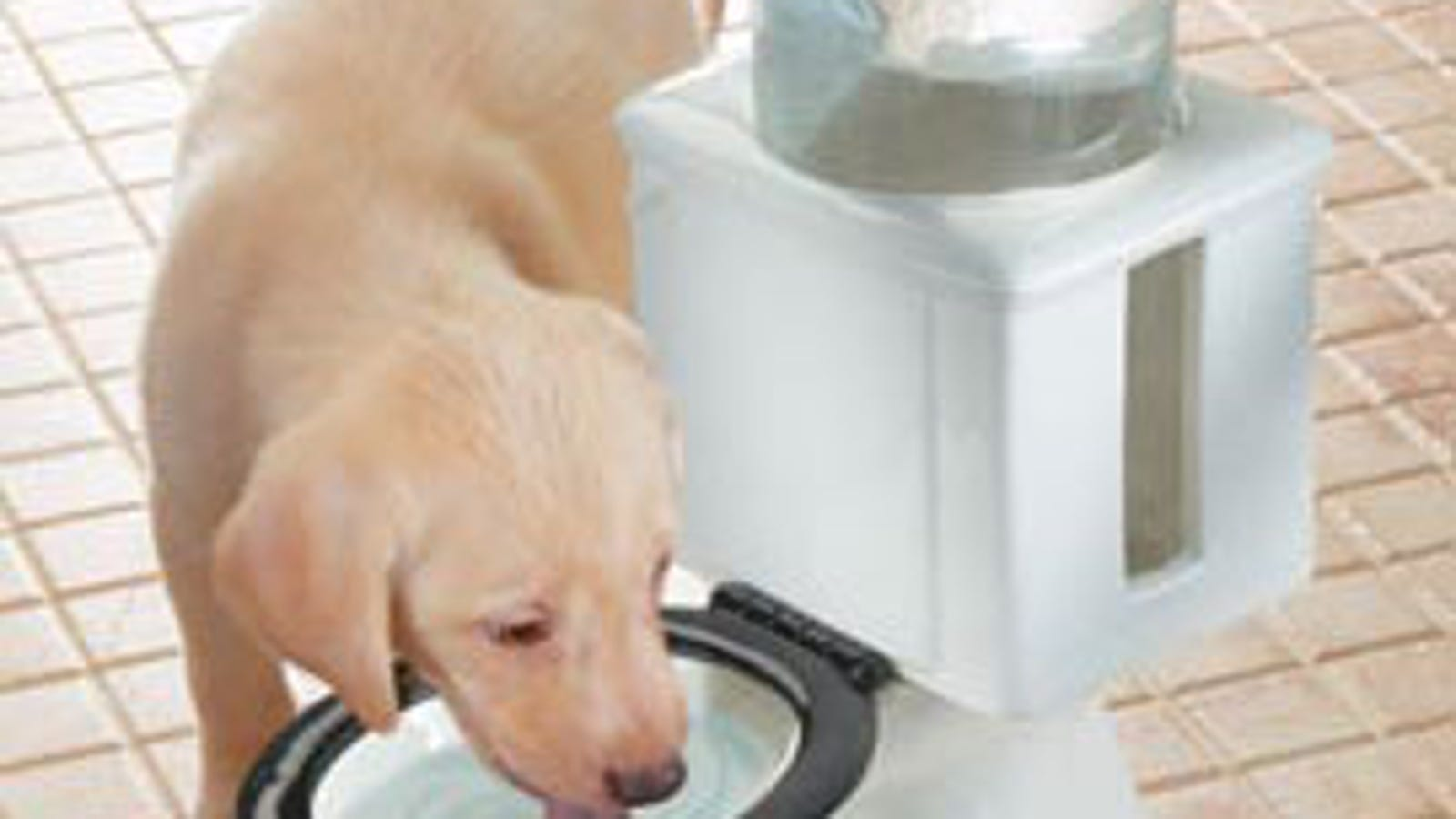 Refilling Dog Bowl For Potty Mouth Pets