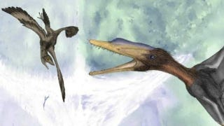 Illustration for article titled The world's tiniest dinosaur was less than two feet long