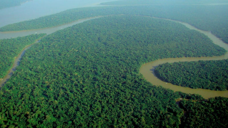 A region of the Amazon forest in Brazil, the world's largest tropical forest. Image: Wikimedia Commons