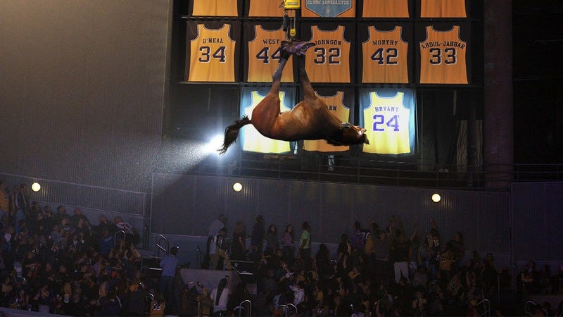 Kobe Bryant's horse hanging from the rafters.