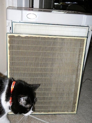 How Often Should You Change Your Air Filter >> How Do I Keep My Apartment from Smelling Like Smoke?