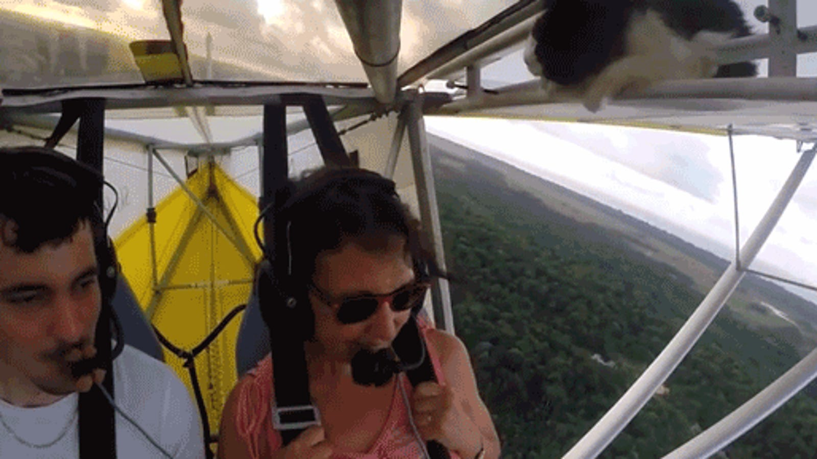 Stowaway Cat Sneaks Into An Airplane And Rides The Wing Back To Earth