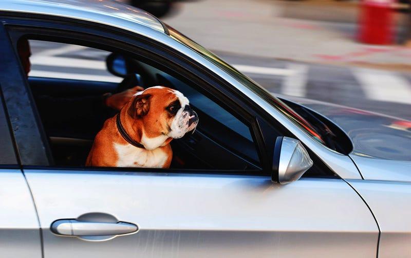 Illustration for article titled Por qué nunca debes dejar un niño o un perro dentro del coche en verano: pueden morir en solo una hora
