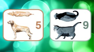 Illustration for article titled Monitor Your Pet's Weight Like a Vet with this Handy Chart