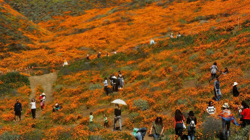 Beautiful Instagrams Closed Down the California Superbloom