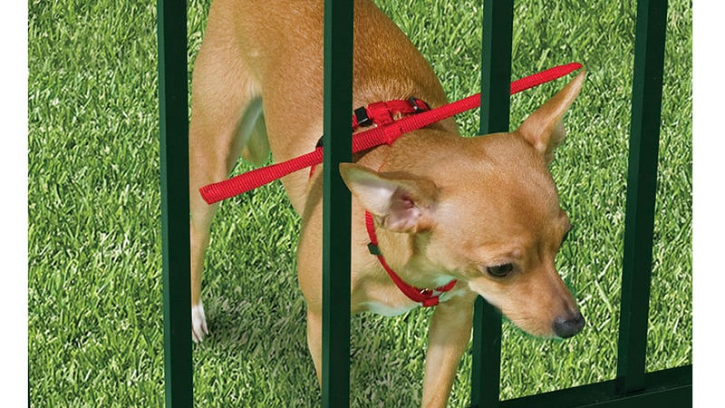 This Special Harness Should Finally Stop Your Tiny Fashion Accessory Dog  From Escaping Through The Rungs Of Your Backyard Fence. Even Though It  Looks Like ...