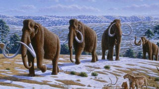 Illustration for article titled No, we won't be able to clone a woolly mammoth in the next five years