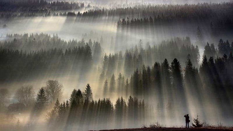 Illustration for article titled Forests, fog and light make these long-exposure photographs look like paintings
