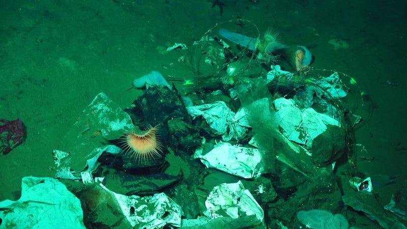 Сміття на океанічному дні на глибині понад дві милі від поверхні. Фото: Інституту океану Шмідта/Ерік Кордес