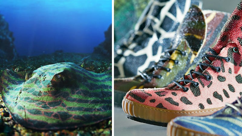 Illustration for article titled $1800 Gets You Sneakers Made From Stingrays Customized Through Genetic Engineering