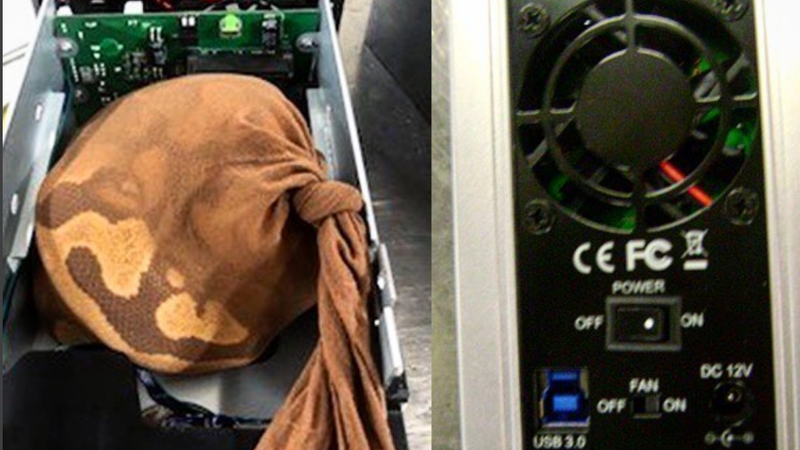 Illustration for article titled Live Python 'Artfully Concealed' in Hard Drive Enclosure Fails to Get on Plane