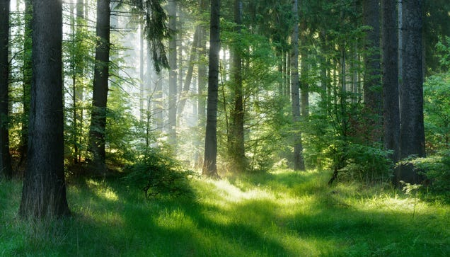 It s Time to Reduce Stress With Some Virtual Forest Bathing