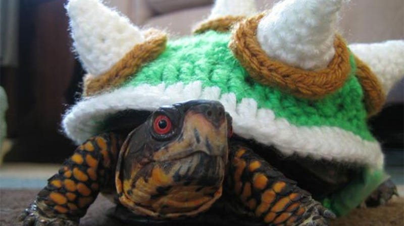 Illustration for article titled Turtle Cosplay Will Stop You Ever Jumping On Bowser Again