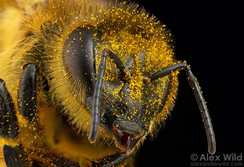 Illustration for article titled Police Are Trying to Use Honeybees to Detect Illegal Drugs