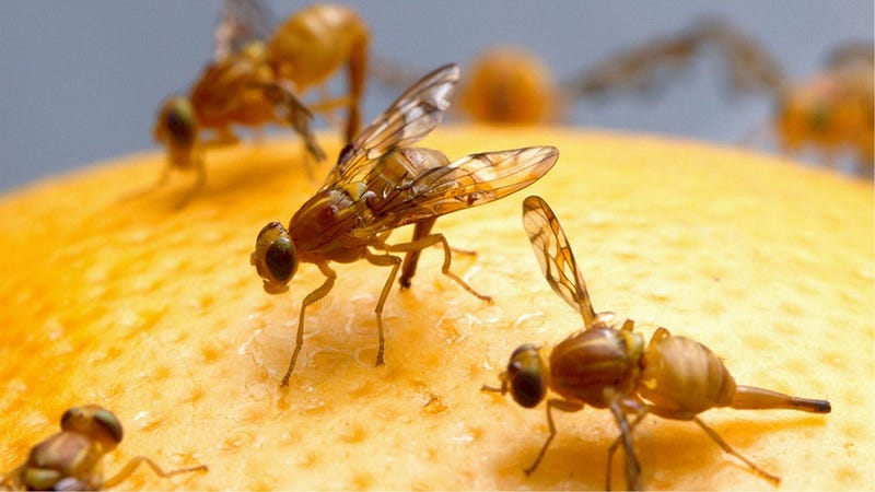 Resistance to 'Last Resort' Antibiotics Being Spread to Humans by Flies