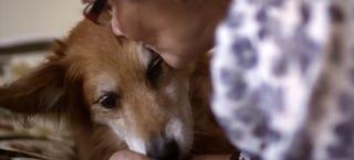 Illustration for article titled Dog saves his owner's life smelling her cancer