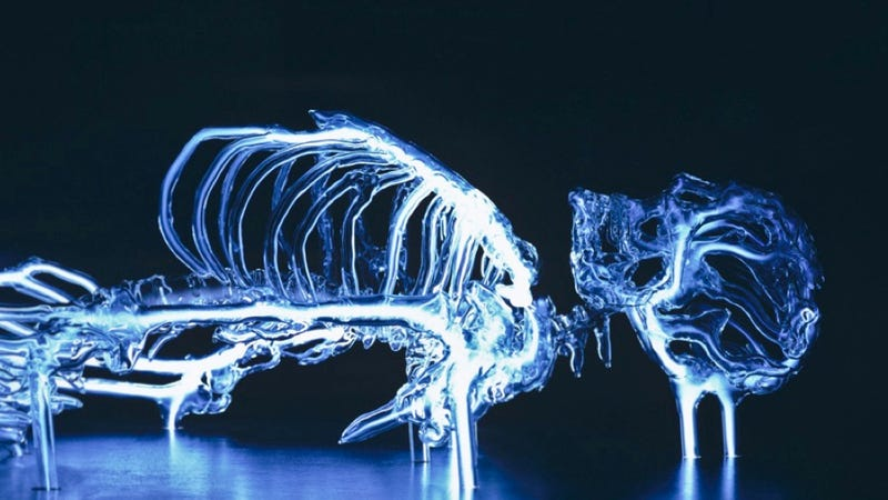 Illustration for article titled This life-size glass skeleton is illuminated by krypton