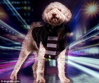 Illustration for article titled Elle's Dog Gets Modeling Contract; Anna Gets Flak; ALT Gets Uggs
