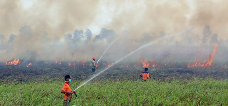 Illustration for article titled Fires in Indonesia are Emitting More Carbon Than All Americans Combined