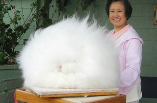 Illustration for article titled Precise measurements reveal that this is the world's fluffiest bunny