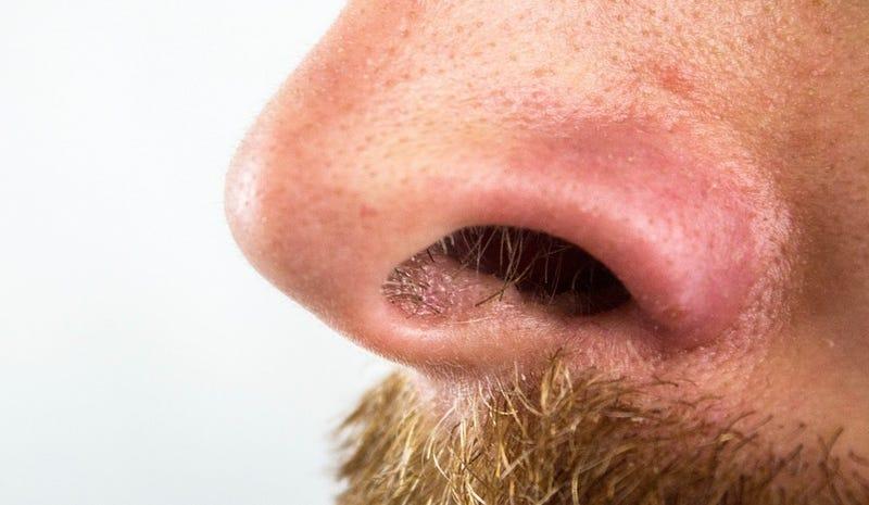 Illustration for article titled Hay una razón de peso por la que no deberías arrancarte los pelos de la nariz