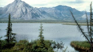 This undated photo shows the highly disputed Arctic National Wildlife Refuge in Alaska, which sits atop plentiful oil reserves the state of Alaska is anxious to drill. In January the Obama administration declared 12.8 million acres of the refuge to be protected wilderness land, which prevents any drilling.U.S. Fish and Wildlife Service/Getty Images